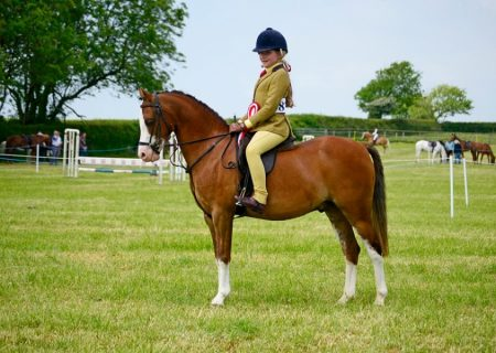 Addington Manor equestrian
